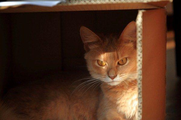 Rumah Bermain Kucing