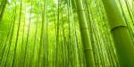 Kreasi Kerajinan Bambu: Hal-Hal yang Harus Anda Tahu tentang Bambu