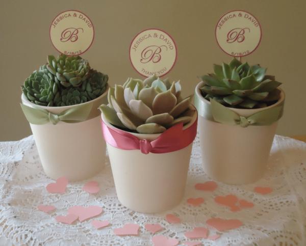 Cara Merawat Souvenir Kaktus Mini Yang Benar